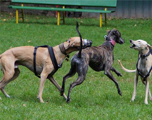 Wer wir sind - zwei spielende Hunde